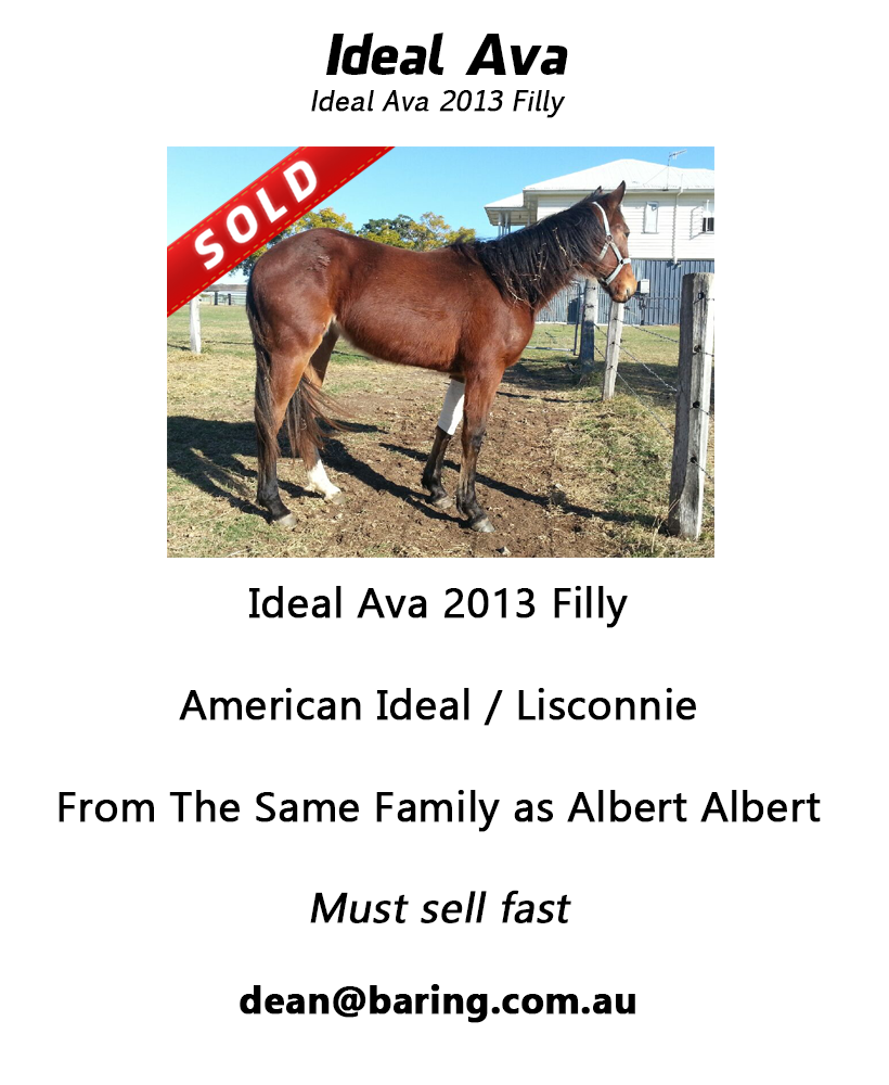 Ideal Ava 2013 Filly png