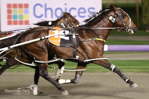 Shandale Improving All The Time - Harness Bred